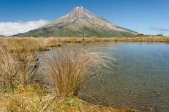 Swampland with grass near mount Taranaki Stock Photography