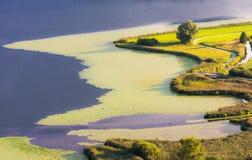 Swampland at lake Hopfensee Stock Images