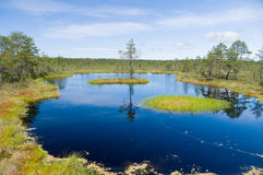 Swampland lake, small island and pine tree Royalty Free Stock Photography