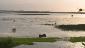 Swampland och shoreline stock video
