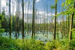 Swampland Stock Image