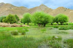 The swampland of tibet. The scene of tibet .looks very beautiful Royalty Free Stock Photography