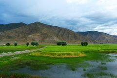 The swampland of tibet. The scene of tibet .looks very beautiful Stock Photography