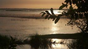 Swampland tussen bomen stock video