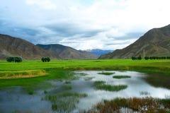 Swampland van Tibet Stock Foto
