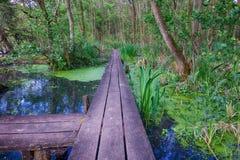 Swampland Walkway HDR 03 Royalty Free Stock Photos