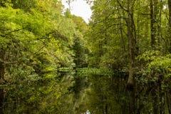 Swamplandsbezinning stock foto's