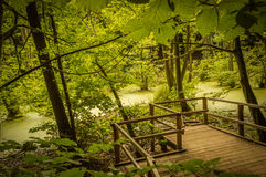 Swamps in the beech forrests on Rügen Island Royalty Free Stock Photography
