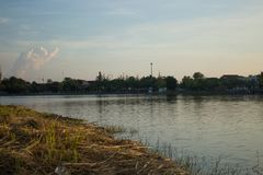 Swamps in the city garden,Udonthani Thailand Royalty Free Stock Images