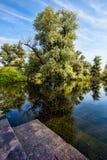 Swamps of Danube Stock Photo