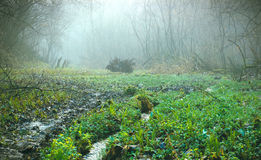 Swamps at dark fog. And green wet grass Royalty Free Stock Image