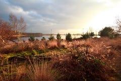 Swamps in Dwingelderveld before sunset Stock Photos