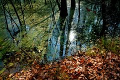 Swamps in forest. Reflection in the deep forest Royalty Free Stock Images