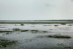 Swamps and lake on overcast day. Yala, Sri Lanka Stock Photos