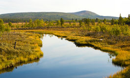 Swamps Royalty Free Stock Images