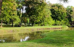 Swamps in the park. Stock Photography