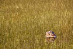 Swamps and a rock. Marshlands on Lofoten, Norway with a lone rock reflecting in water Stock Images