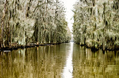 Swamps, Spanish moss, and bayou on Caddo Lake in east Texas. East Texas and Louisiana both have swamps with cypress trees full of Spanish moss Royalty Free Stock Image
