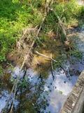 Swamptime стоковое изображение