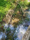 Swamptime immagine stock