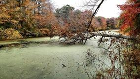 swampy Fotografia Stock
