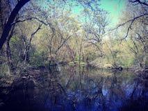 swampy Royalty-vrije Stock Fotografie