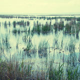 Swampy area with grass and sedge Stock Photos