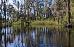 Swampy2 Stock Photos