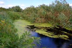 Swampy Fluss Lizenzfreie Stockfotografie