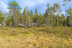 Swampy forest edge. Royalty Free Stock Photos