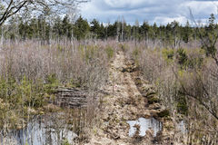 Swampy forest road Stock Photography