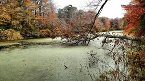 Swampy. Green lake Stock Photo