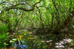Swampy inlet in the woods stock photo
