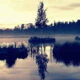 Swampy  lake   Royalty Free Stock Photos