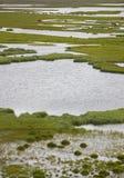 Swampy landscape Iceland Royalty Free Stock Images