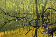 The swampy landscape royalty free stock photography
