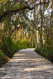 Swampy path in the everglades Stock Image