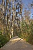 Swampy Pfad in den Sumpfgebieten Lizenzfreies Stockfoto