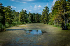 A swampy river Stock Photo