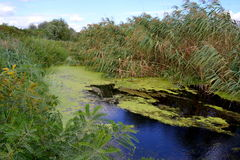 Swampy river Royalty Free Stock Photography