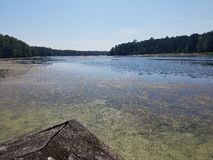 Swampy See Lizenzfreie Stockfotografie