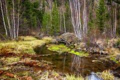 Swampy stream in Altay Taiga Stock Photography