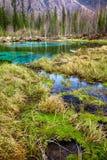 Swampy stream in Altay Taiga Stock Photo