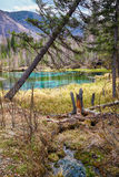 Swampy stream in Altay Taiga Stock Image