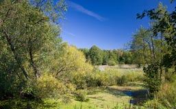 Swampy Tal von Lesna Fluss am sonnigen herbstlichen Tag Stockfotografie