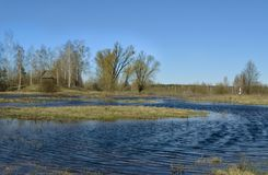 Swampy terrain. The flood of the river Pripyat.Belarus. Spring flood in Polesia. The flood of the river Pripyat.Уarly spring. Belarus.The flood of the river stock photography