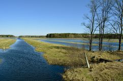 Swampy terrain. The flood of the river Pripyat.Belarus. royalty free stock photography