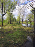 Swampy territory in the spring time Royalty Free Stock Photo