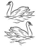 Swan. A swan swimming on a pond. Vector lineart drawing Stock Photo