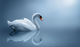 Free Swan Royalty Free Stock Images - 17474389